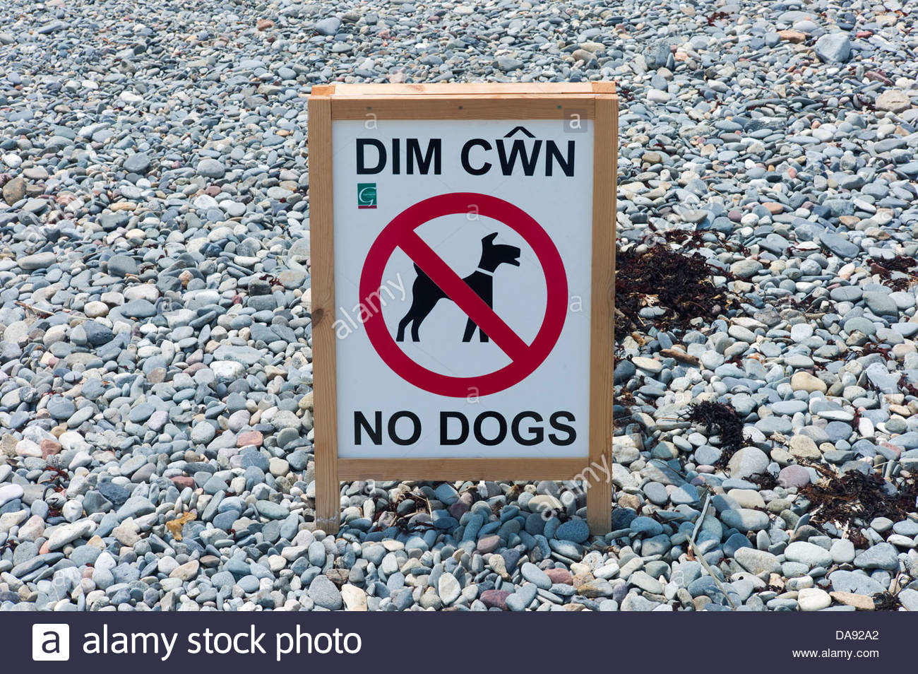'No Dogs' Welsh / English bi-lingual sign on the beach at Criccieth, North Wales - Stock Image