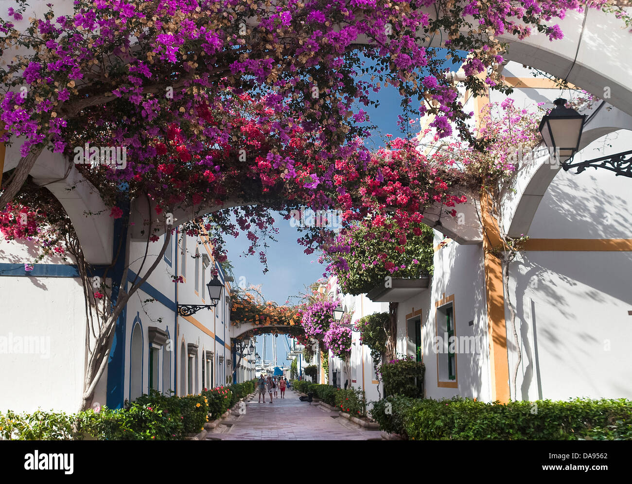 Bougainvillea, Spain, Europe, Canary Islands, Gran Canaria, Mogan, Puerto, arch, architecture, colourful, flowers, - Stock Image