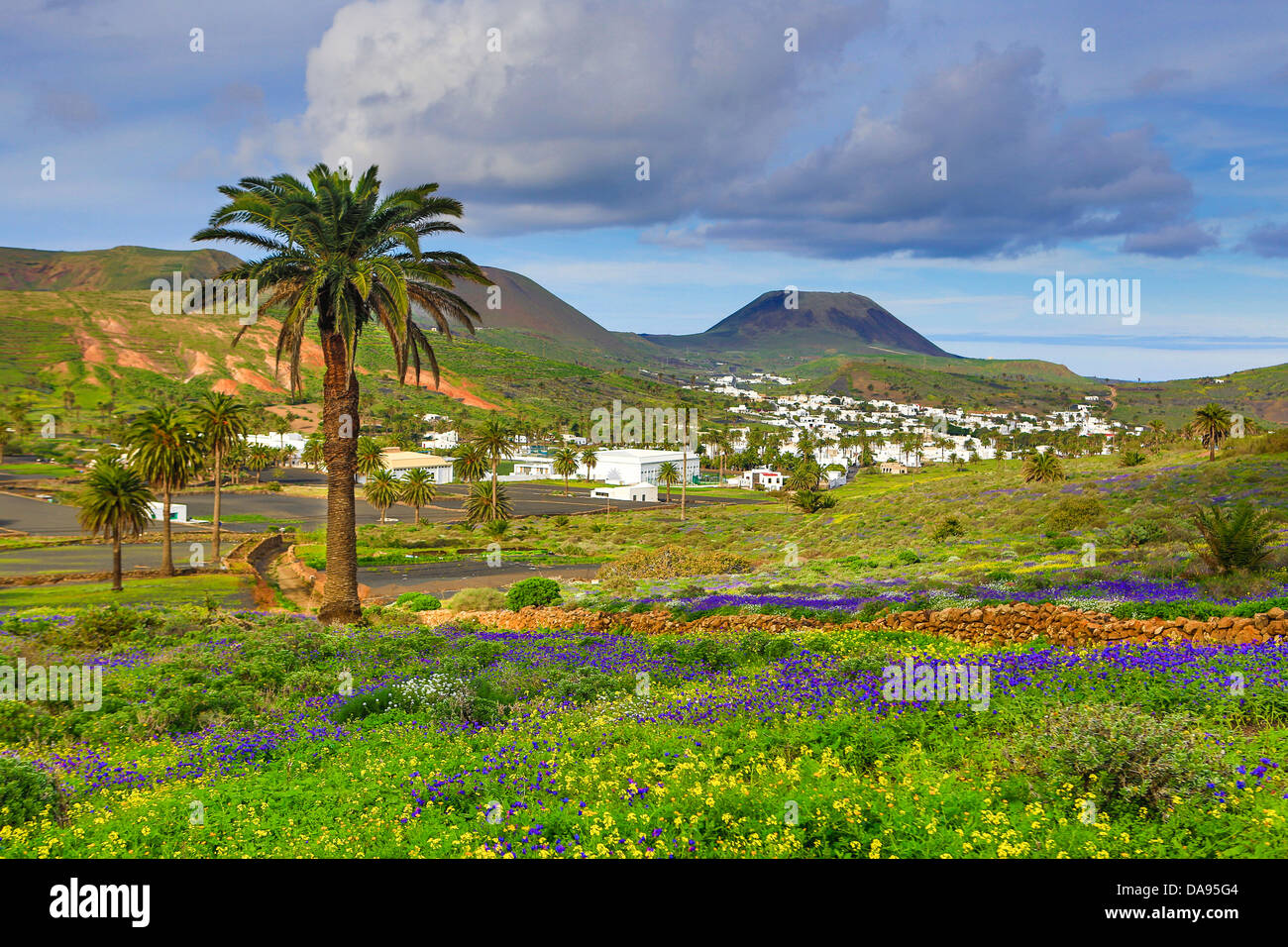 Spain, Europe, Canary Islands, Haria, Lanzarote, Mague, Village, agriculture, colourful, flowers, island, landscape, - Stock Image