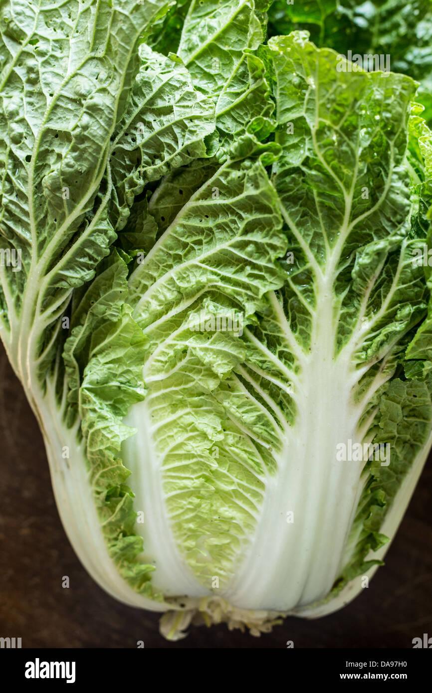 Ohio Napa Cabbage - Stock Image