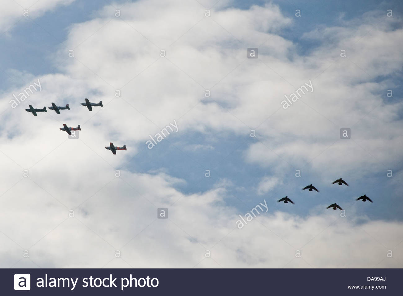 Airplanes and birds - Stock Image