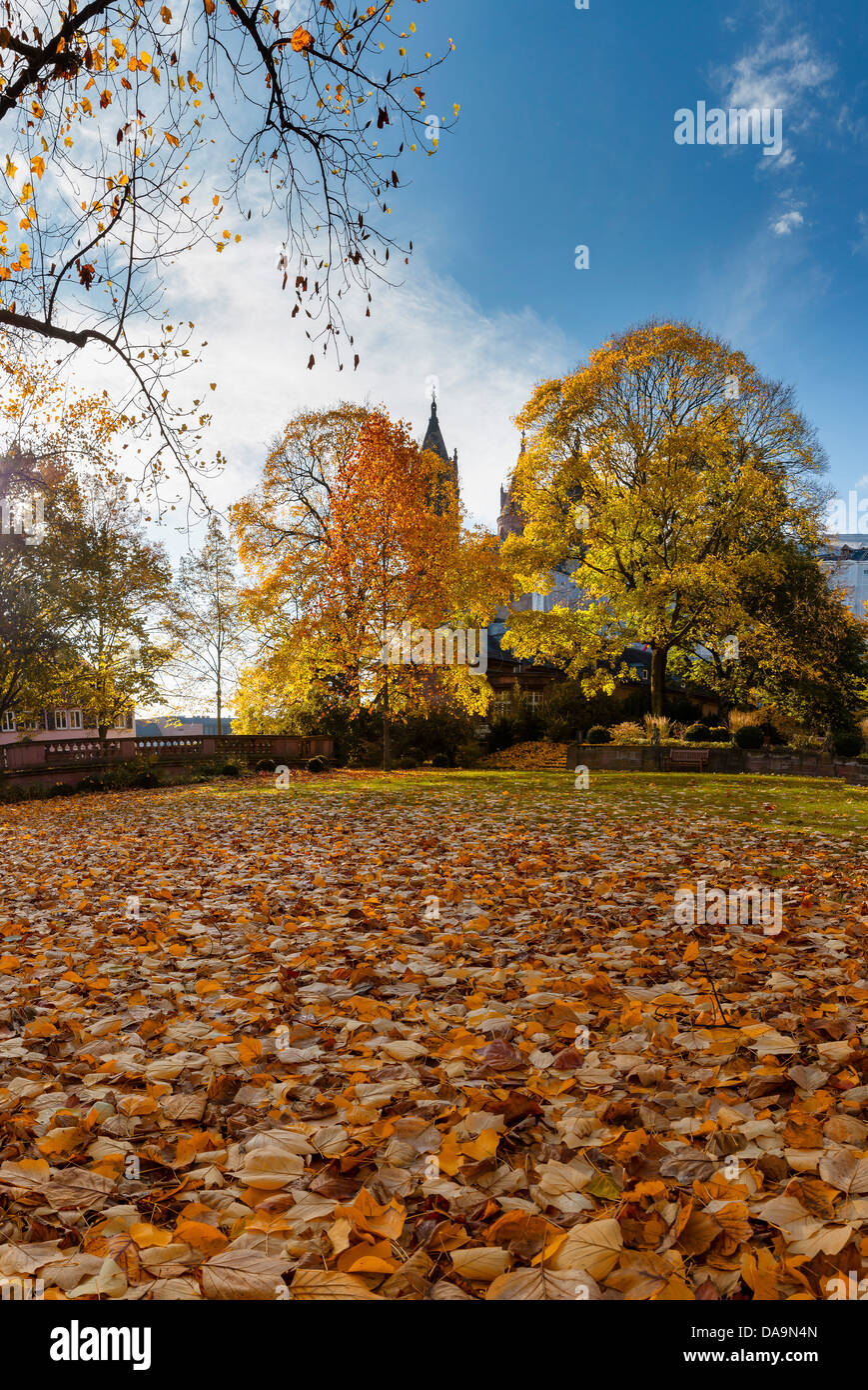Germany, Europe, Rheinland Pfalz, Worms, cathedral, church, monastery, forest, wood, trees, autumn, autumn leafs, - Stock Image