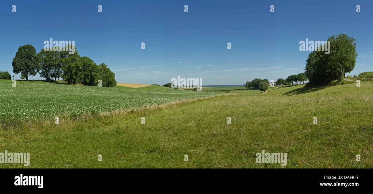Netherlands, Holland, Europe, Termoors, Klimmen, Hilly, Hill, countryside, landscape, field, meadow, trees, summer, - Stock Image