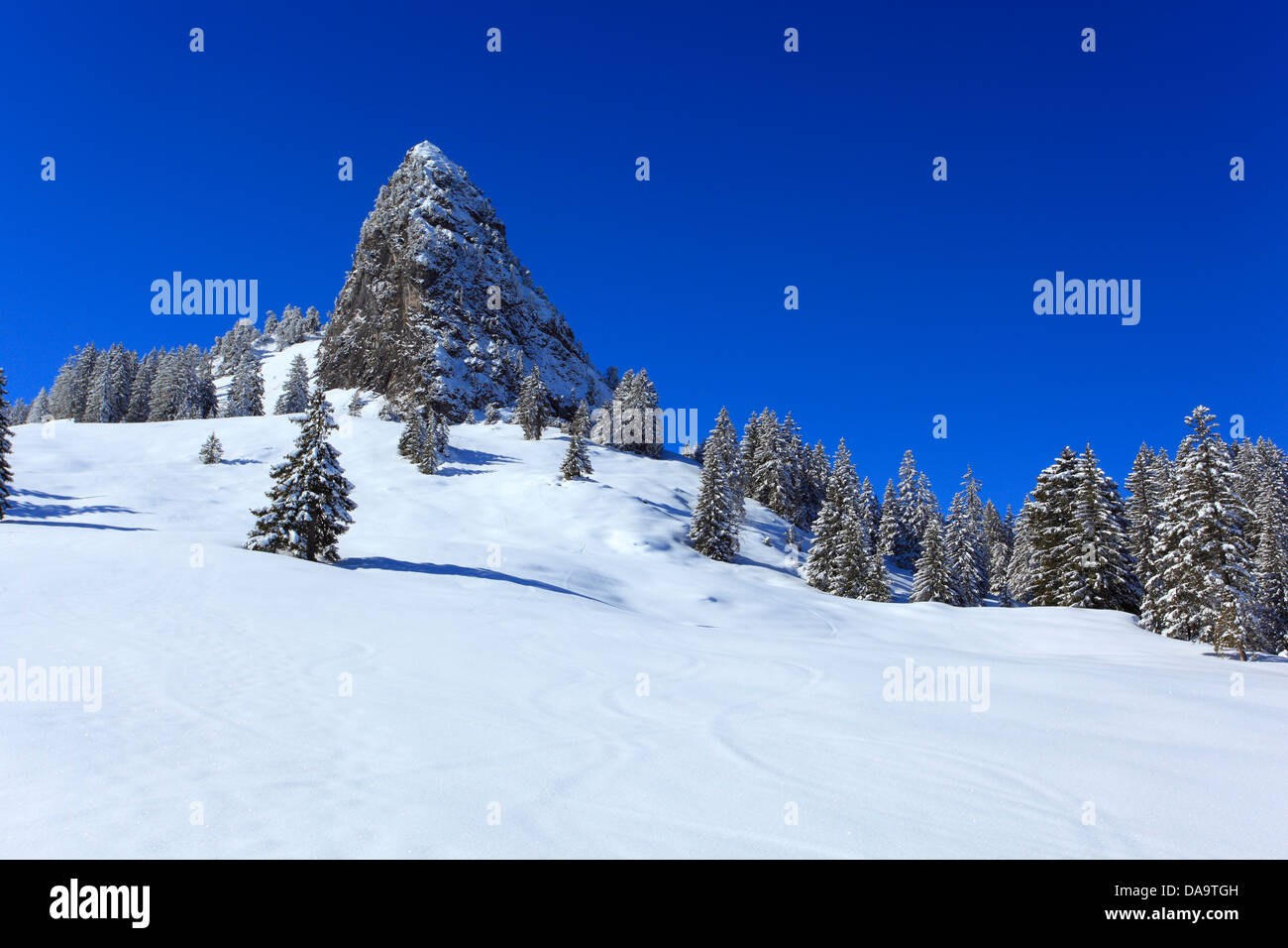 View, mountain, mountains, trees, spruce, spruces, mountains, summits, peaks, Largely Schijen, Ibergeregg, Central - Stock Image