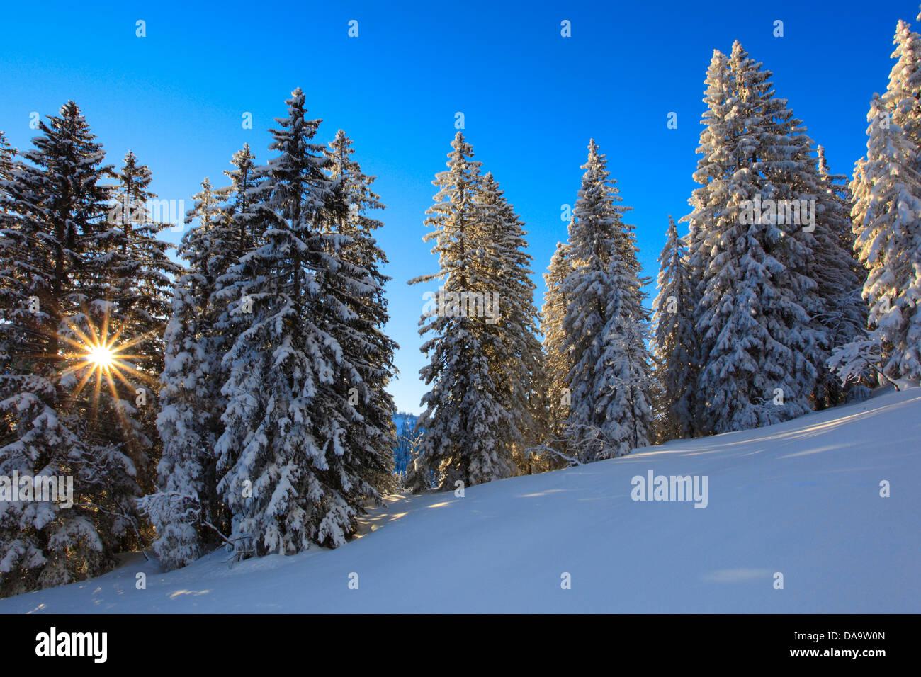 Alps, tree, trees, spruce, spruces, back light, sky, cold, morning, morning light, snow, Switzerland, Europe, sun, - Stock Image
