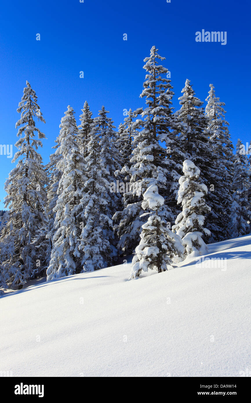 Alps, trees, spruce, spruces, sky, snow, Switzerland, Europe, sun, sunshine, fir, firs, wood, forest, winter, alpine, - Stock Image