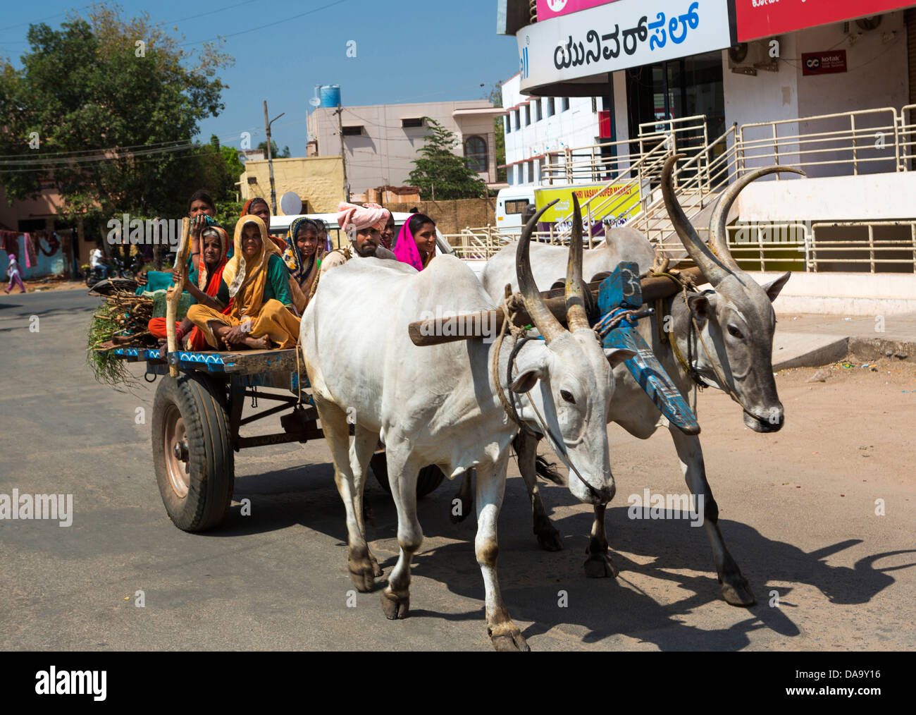 India, South India, Asia, bulls, cart, chariot, colourful, farmers, transport, primitive, ox, - Stock Image