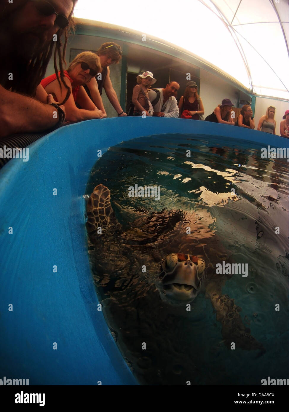 Tourists visiting turtle rehabilitation centre on Fitzroy Island, off Cairns, Queensland, Australia. No MR or PR - Stock Image