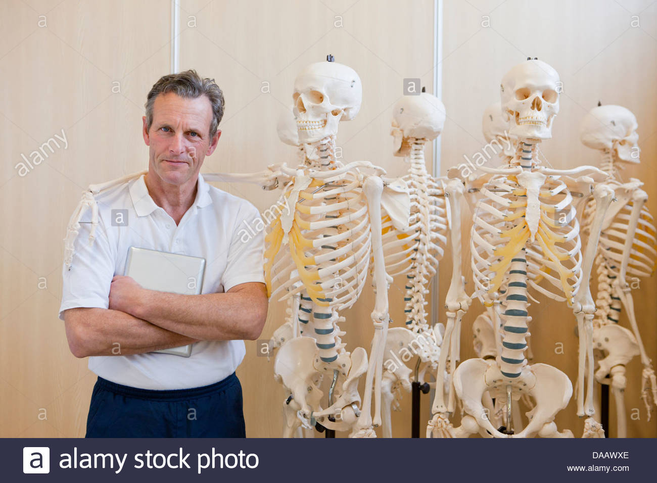 Portrait of confident sports scientist standing next to skeleton models - Stock Image