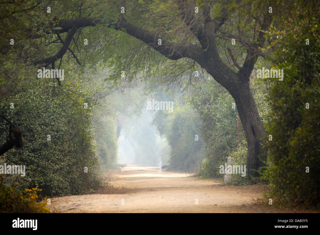 Away, tree, mystical, mysterious, fog, Keoladeo, national park, Bharatpur, India, Asia, Rajasthan, - Stock Image