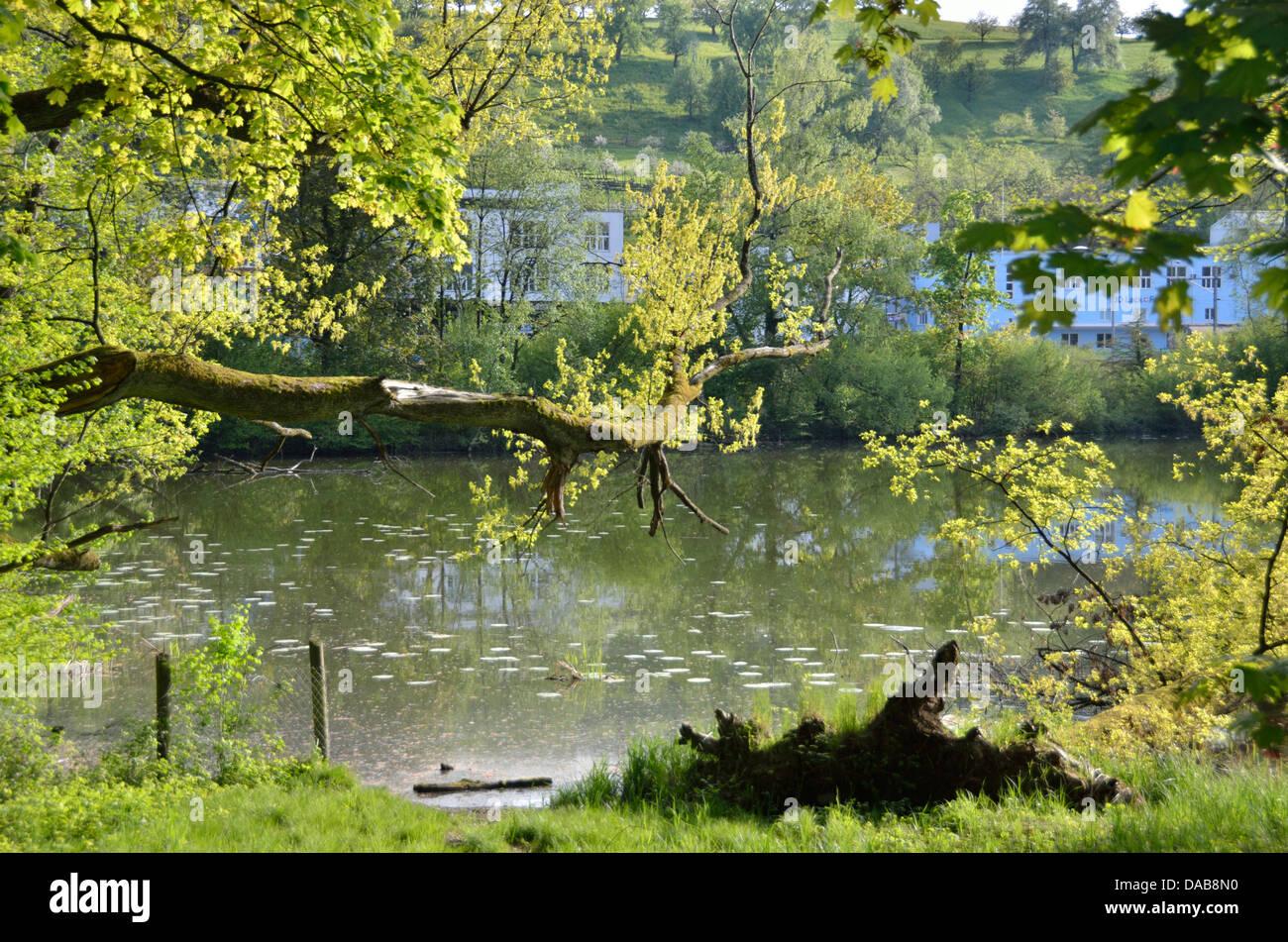 Ausee lake Au, Zurich, Switzerland - Stock Image