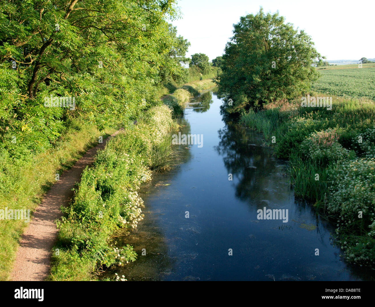 Towpath of The Grand Western Canal near Sampford Peverell, Devon. UK - Stock Image