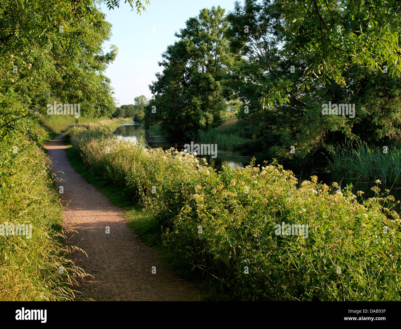 Towpath on The Grand Western Canal near Sampford Peverell, Devon. UK - Stock Image