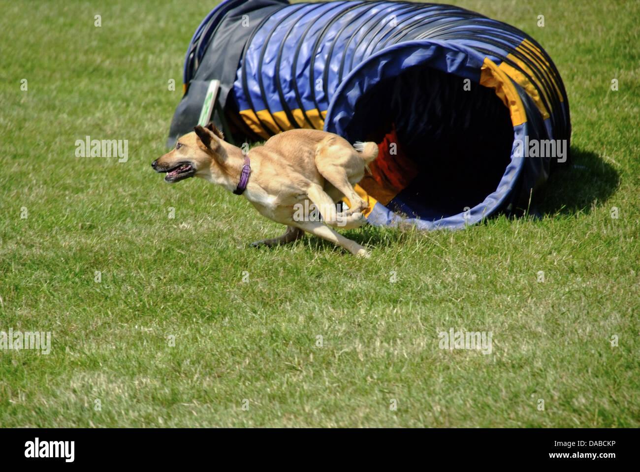 Black Tailed Prairie Dog Running Speed