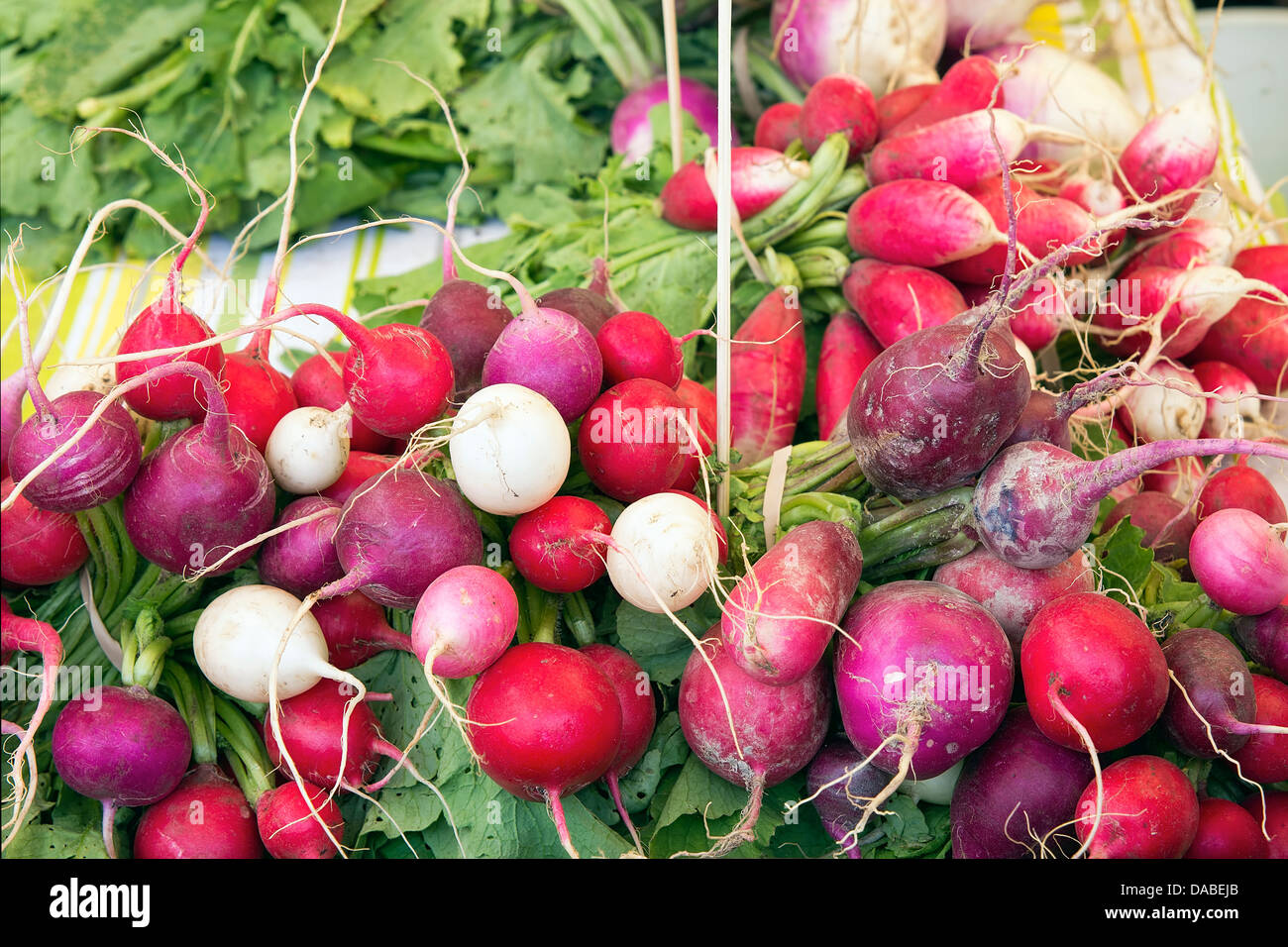 Heirloom and Easter Egg Colorful Radish Bunches at Farmers Market Fruits and Vegetables Stall - Stock Image