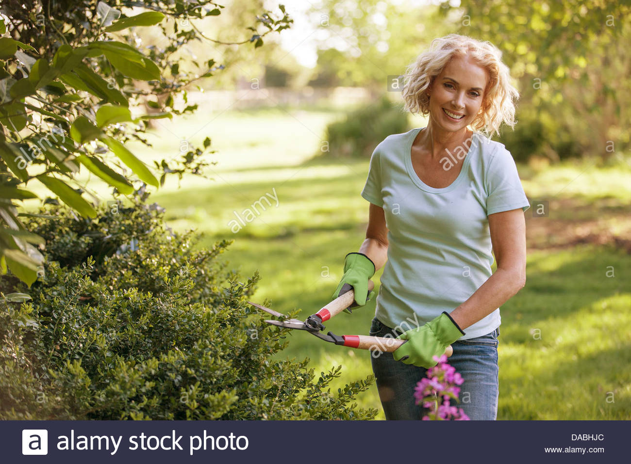 A mature woman trimming a hedge with garden shears - Stock Image