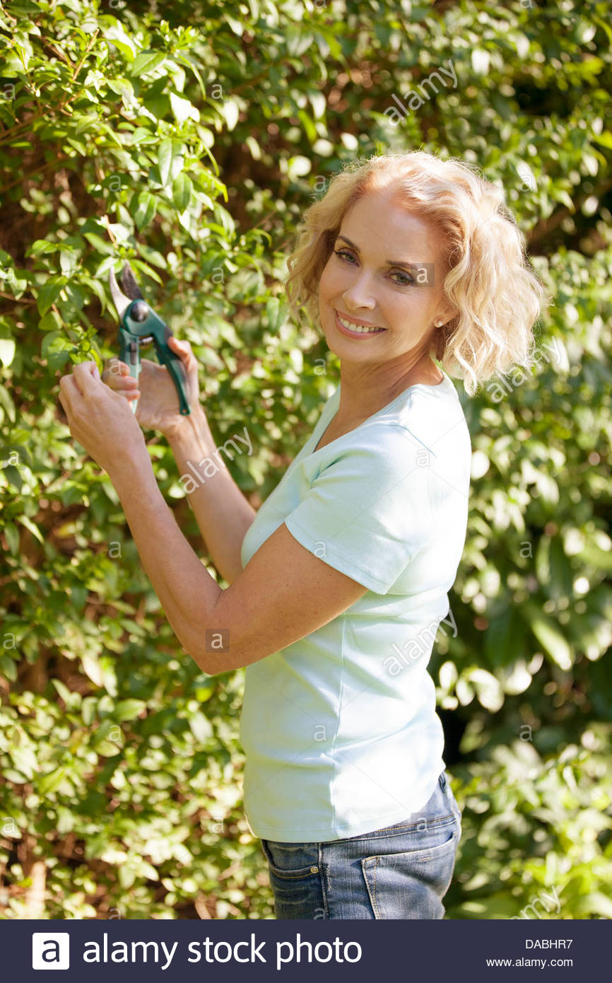 A mature woman pruning a bush - Stock Image