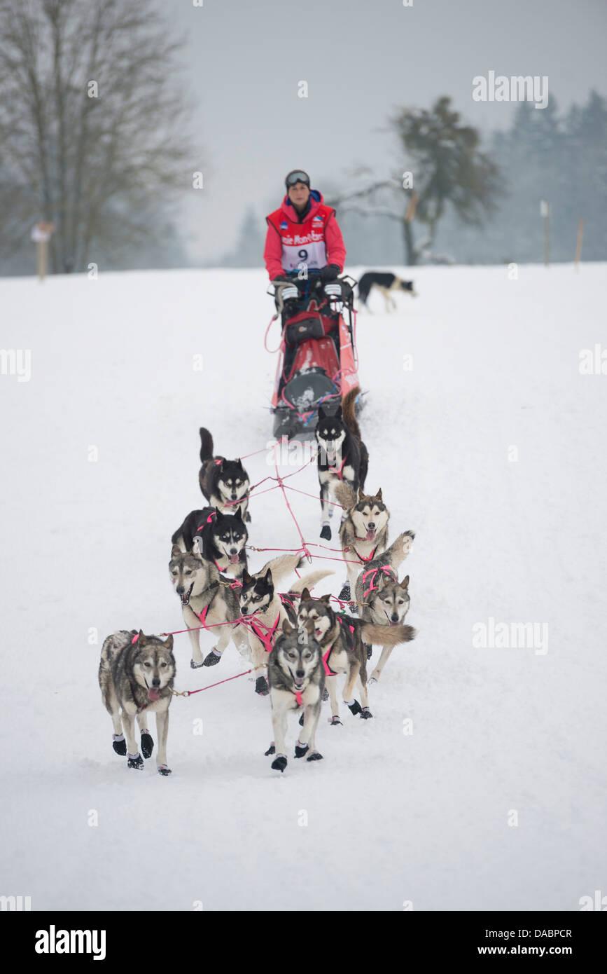 Husky dogs and musher, international dog sled race, La Grande Odyssee Savoie Mont Blanc, Haute-Savoie, France, Europe - Stock Image