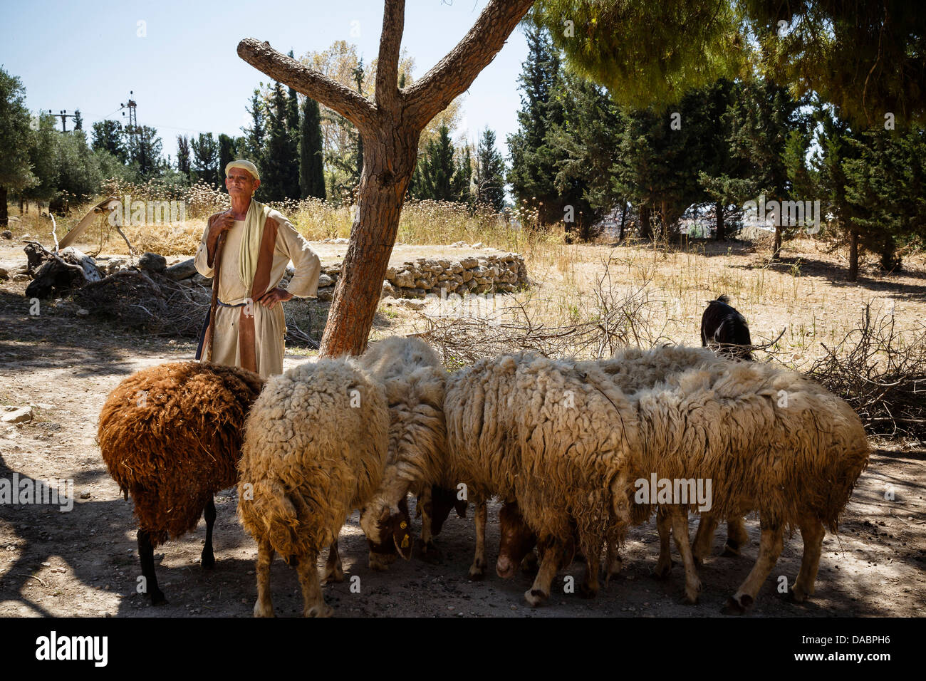 Nazareth Village, recreating Nazareth in the time of Jesus, Nazareth, Lower Galilee region, Israel, Middle East - Stock Image