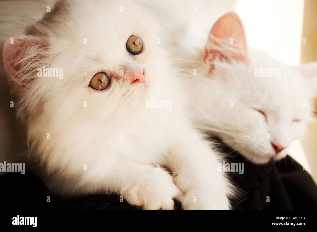 Cats - Stock Image