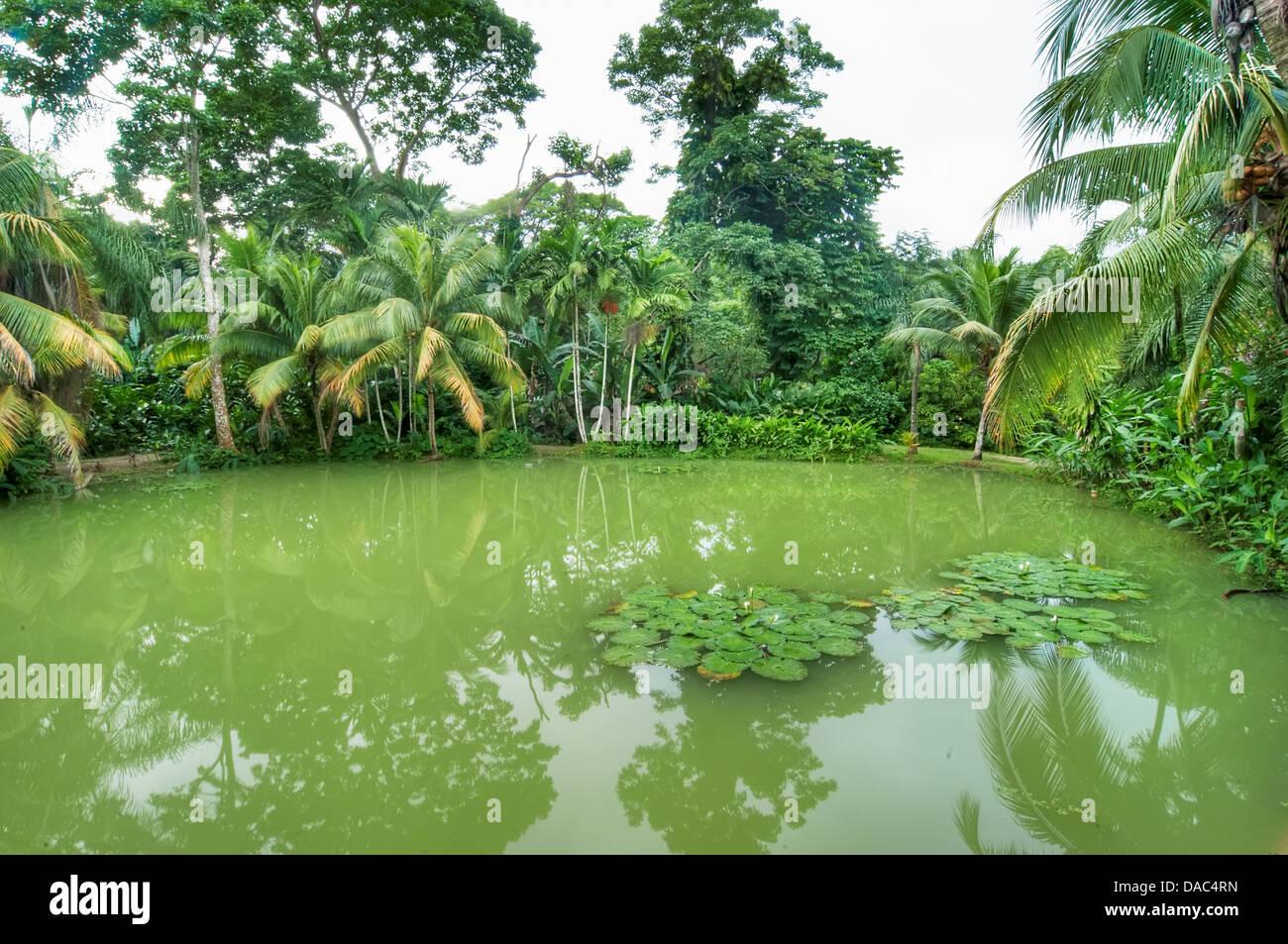Beautiful Jamaican Landscape Stock Photos Beautiful Jamaican