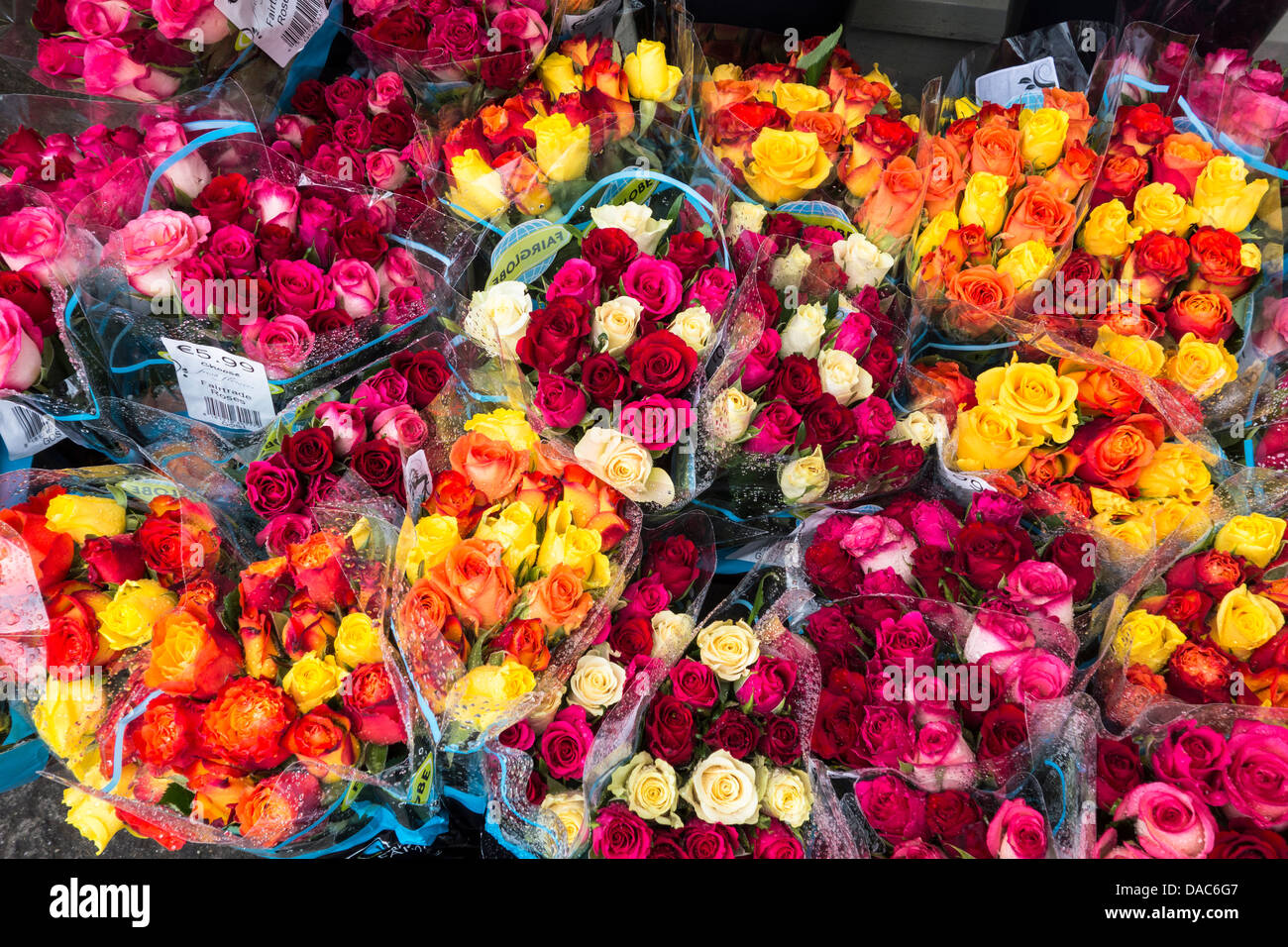 Bouquets of roses on sale in front of a flower shop- red orange, yellow, pink and purple - Stock Image