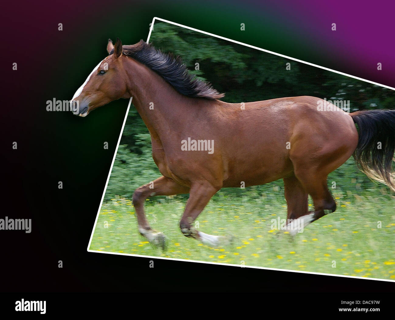galloping horse out of bound gradient digital art - Stock Image