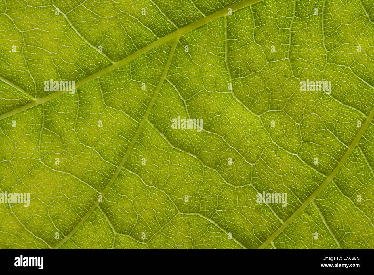 Extreme Macro of Leaf detail great background for botany or scientific biology papers - Stock Image