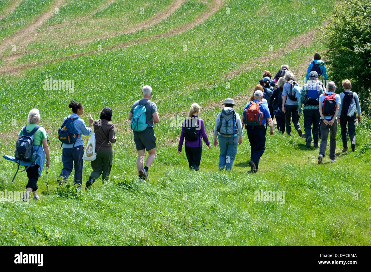 Walkers in large organised group on footpath beside farmland - Stock Image