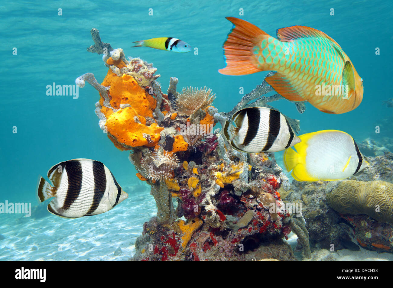 Vibrant colors of marine life in a coral reef with colorful fish, sea sponges and tube worms - Stock Image