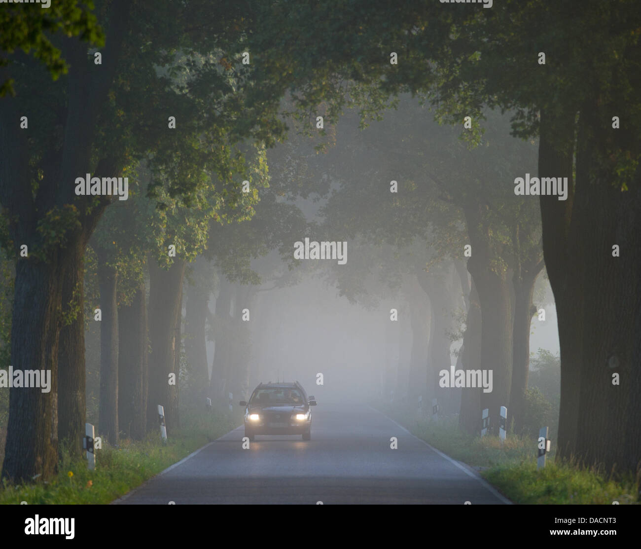 A car drives through morning fog near Mallnow, Germany, 28 September 2011. Autumn leaves, dampness, backlighting - Stock Image