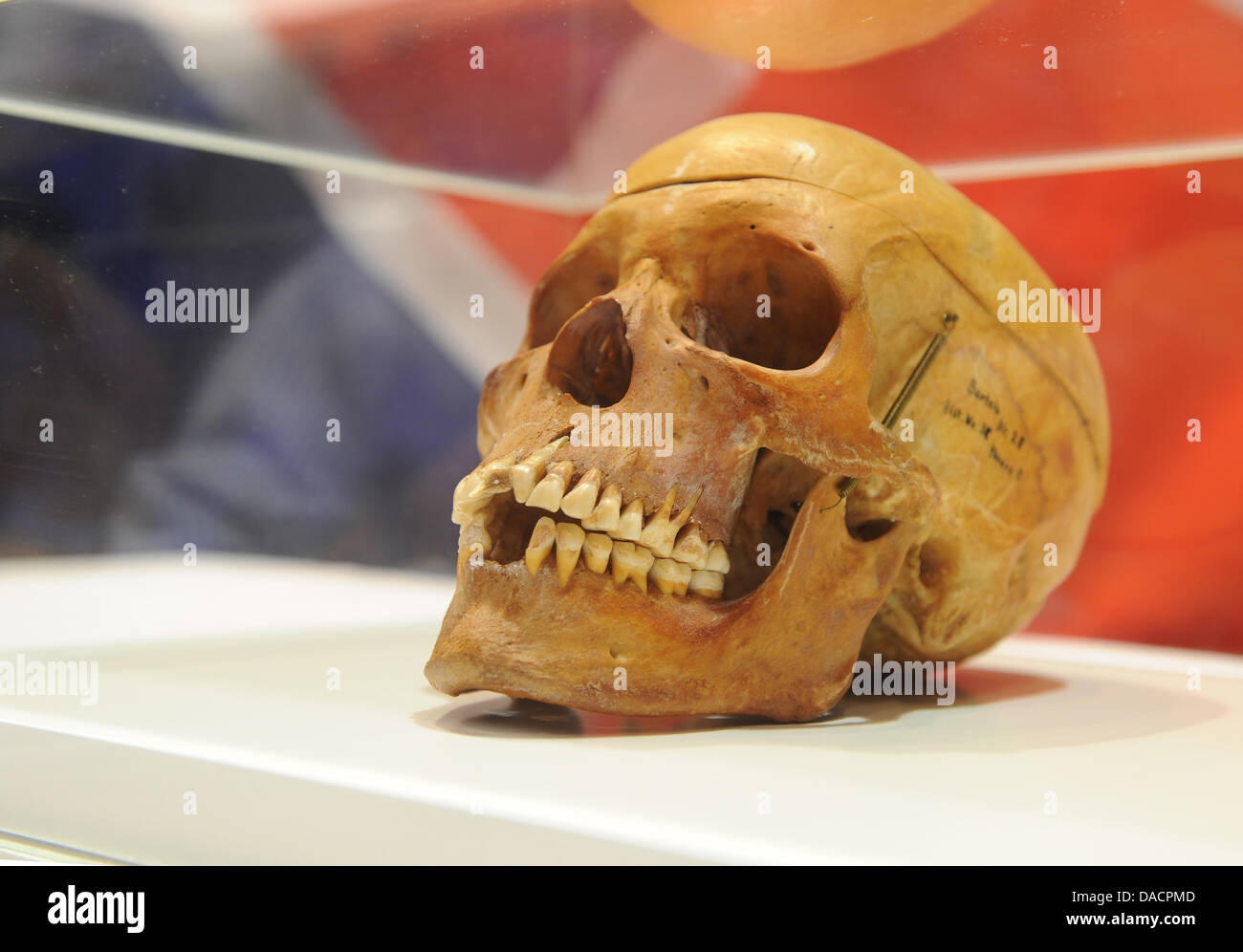 A skull is seen during the handover of 20 skulls to the victims' organization 'Ovaherero/Ovambanderu - Coucil - Stock Image