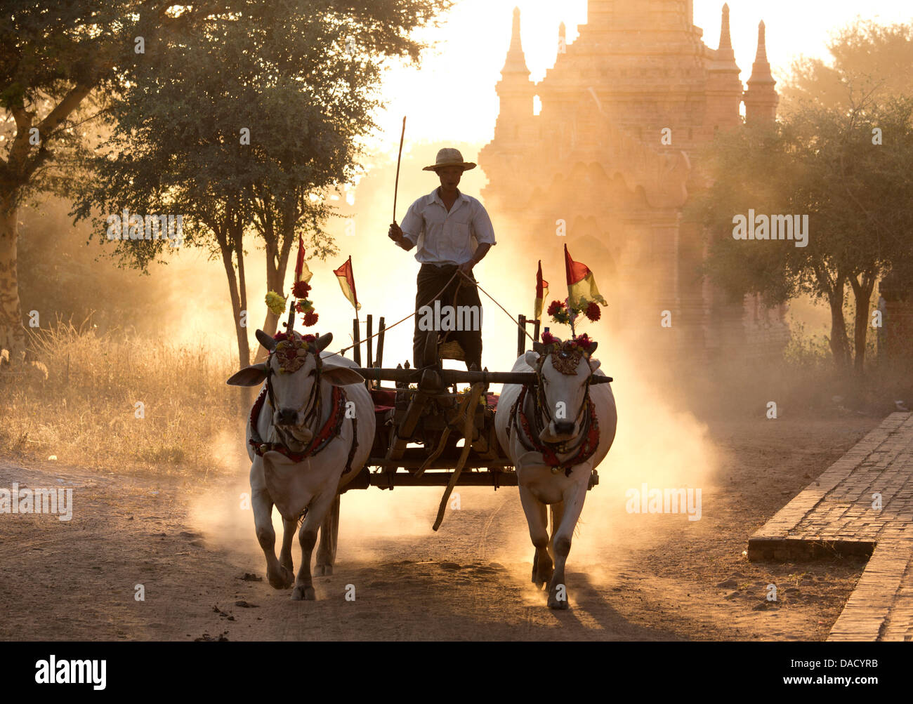 Bullock cart on a dusty track among the temples of Bagan with light from the sun shining through the dust, Bagan, - Stock Image