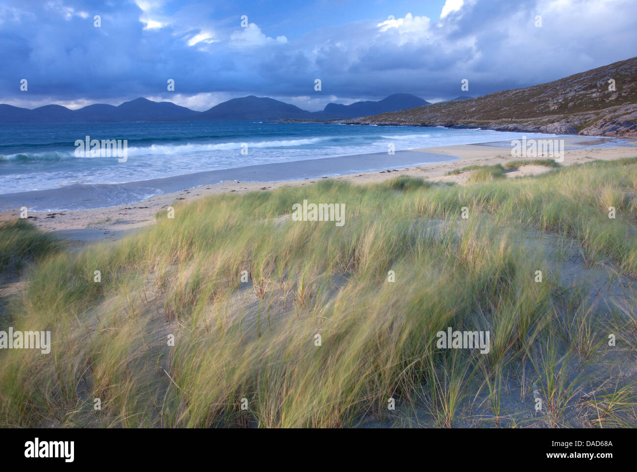 Beach at Luskentyre with dune grasses blowing in the foreground, Isle of Harris, Outer Hebrides, Scotland - Stock Image