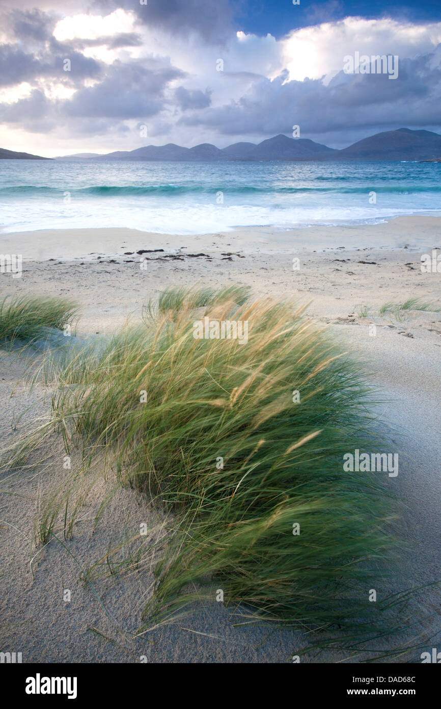 Beach at Luskentyre with dune grasses blowing in the foreground, Isle of Harris, Outer Hebrides, Scotland Stock Photo