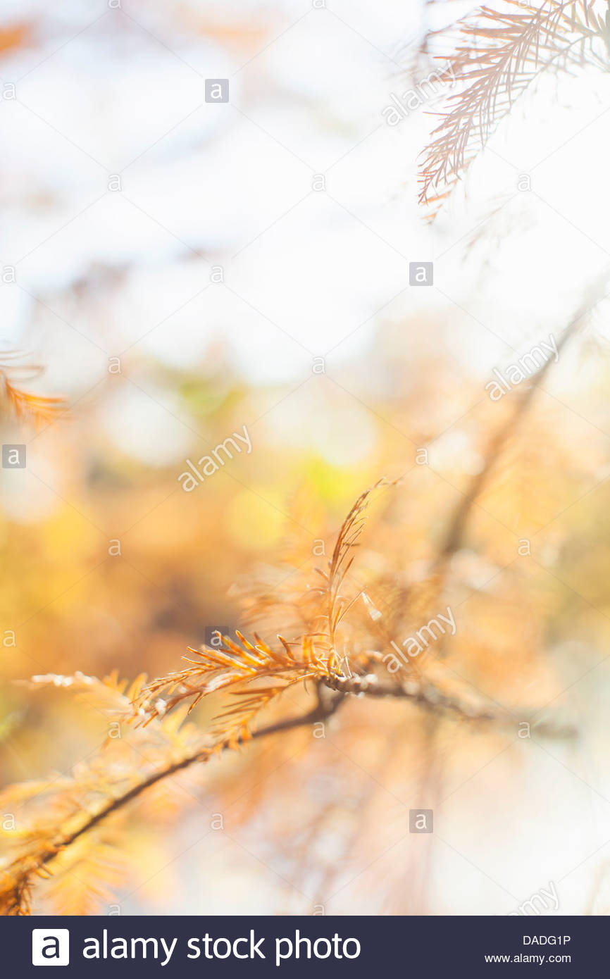 Close up autumnal shot of tree branch - Stock Image