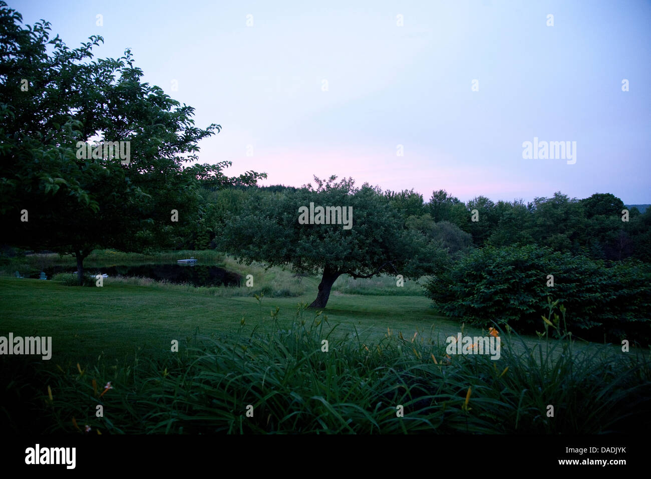 Lush green park at dusk - Stock Image