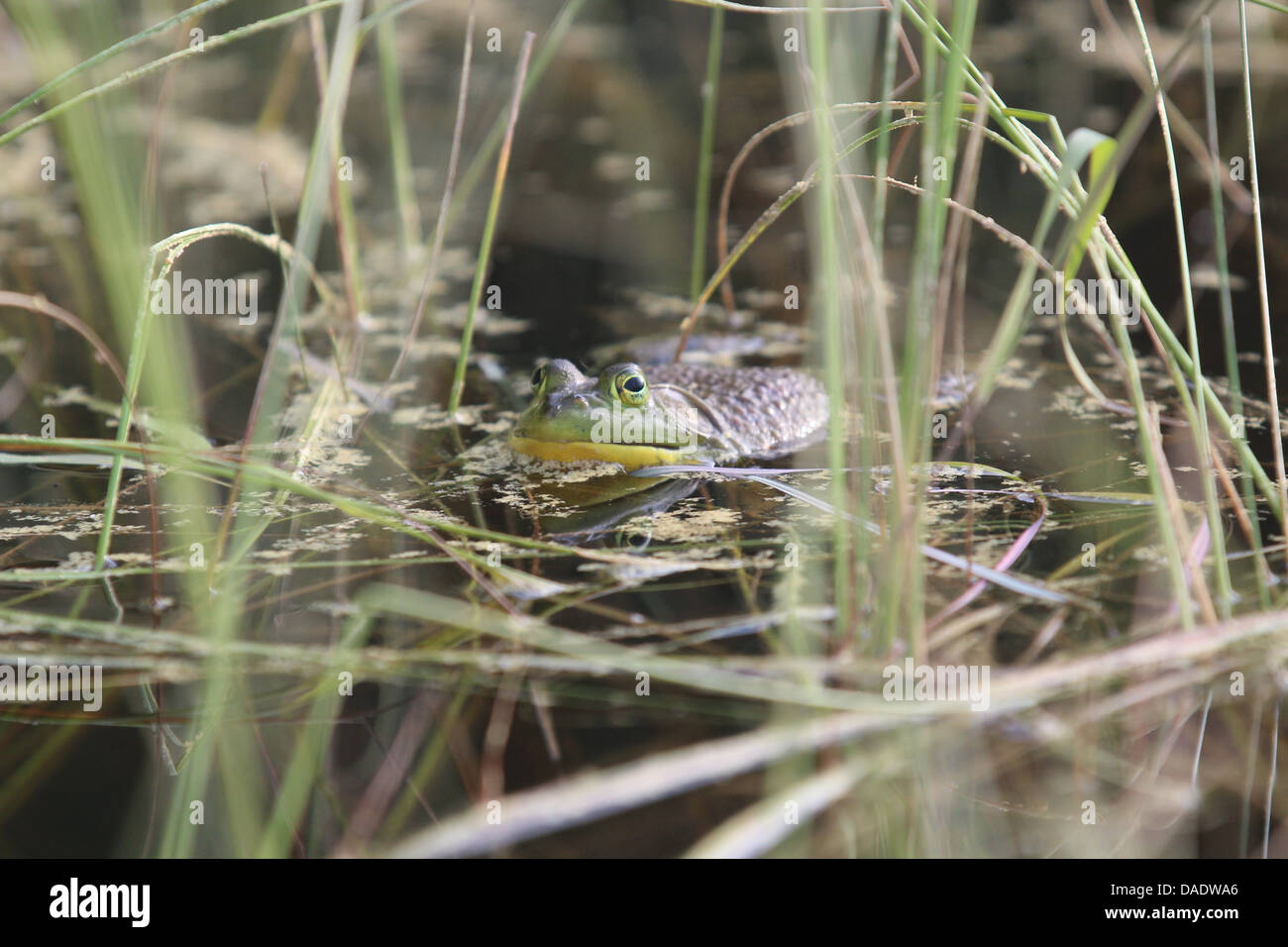 Marsh flora and fauna Stock Photo