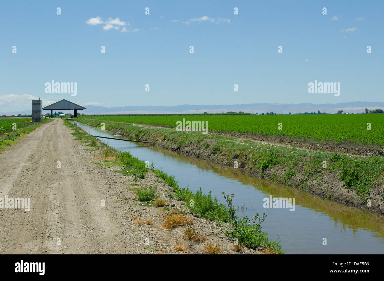corn field, irrigation canal, California delta west of Stockton - Stock Image