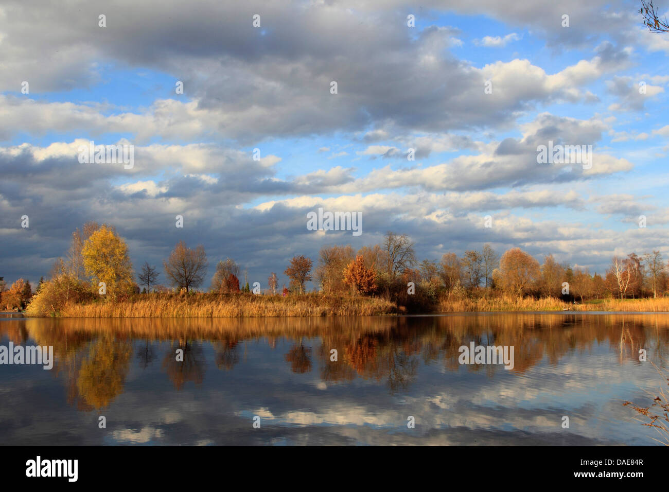 Altrhein oxbow lake in autumn, Germany - Stock Image