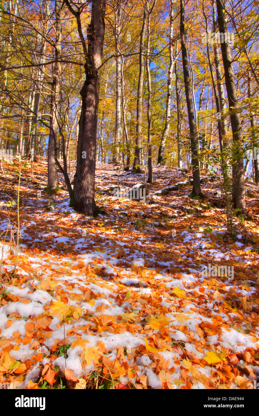 first snow in autumn forest, Germany, Bavaria, Oberbayern, Upper Bavaria Stock Photo