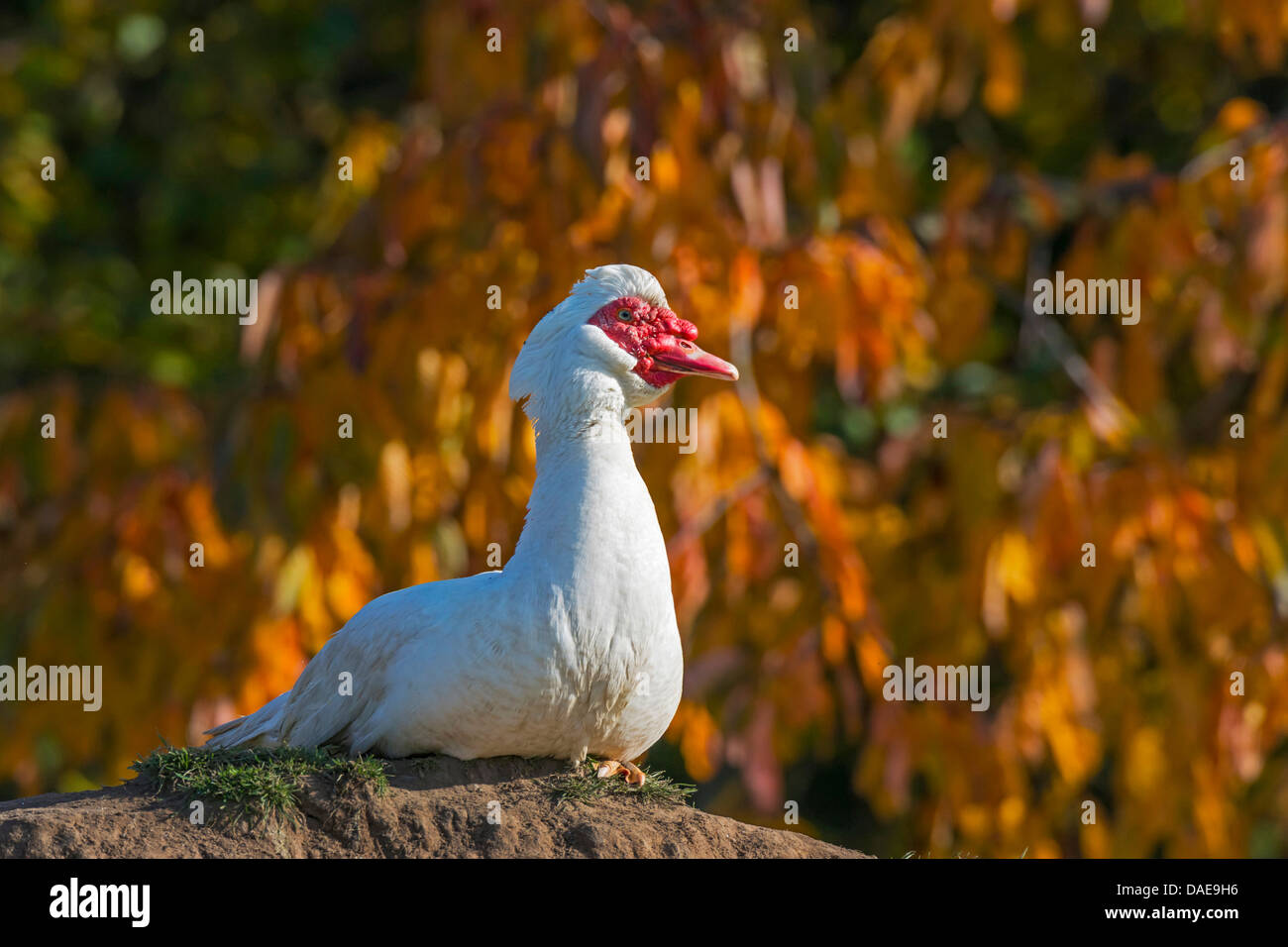Duck Form Stock Photos & Duck Form Stock Images - Alamy