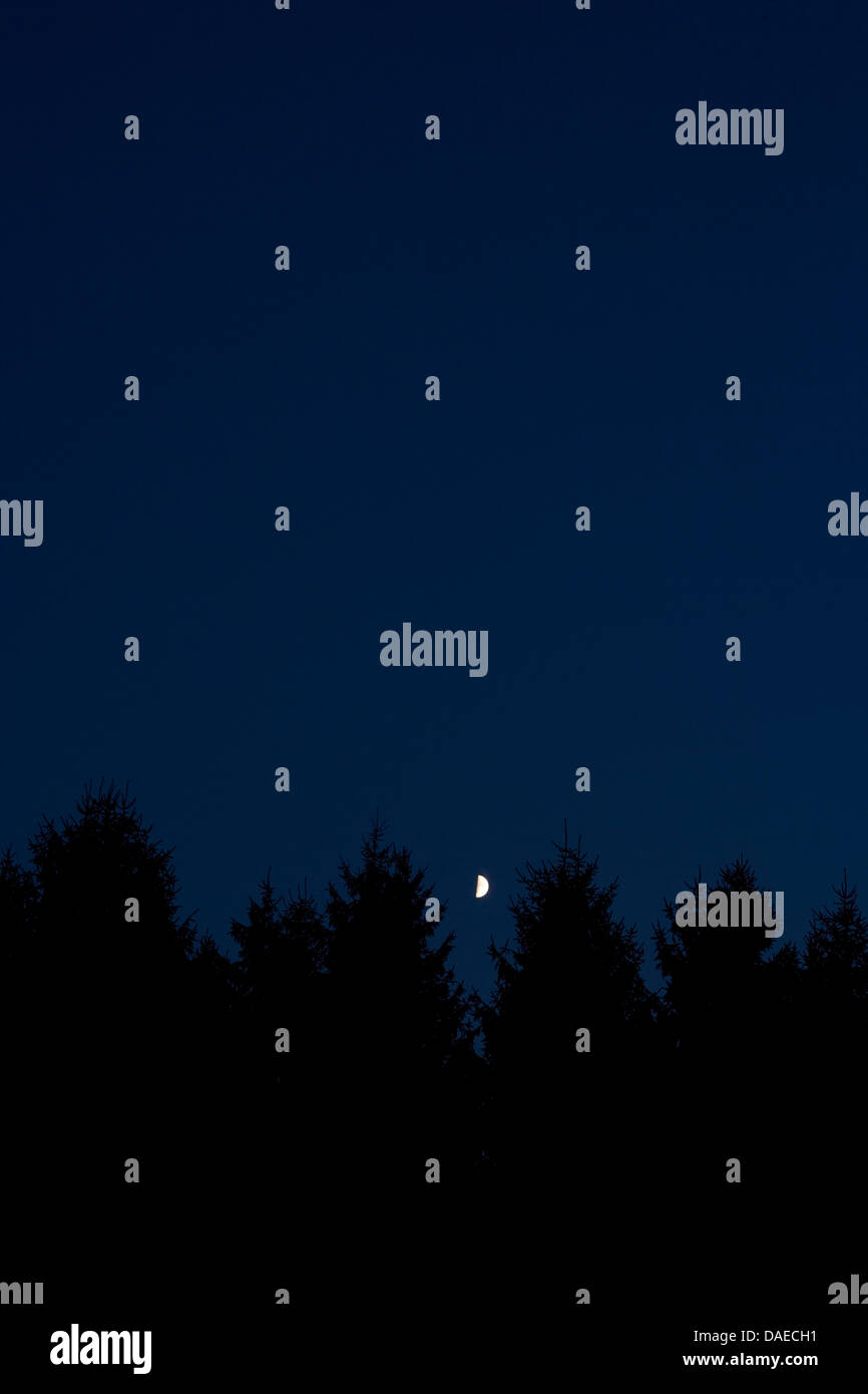 MOON OVER FIR TREES AT NIGHT - Stock Image