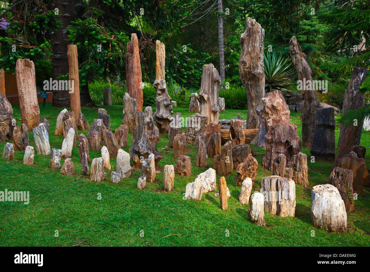 petrified wood exhibit at the National Kandawgyi Gardens, Burma, Pyin U Lwin Stock Photo