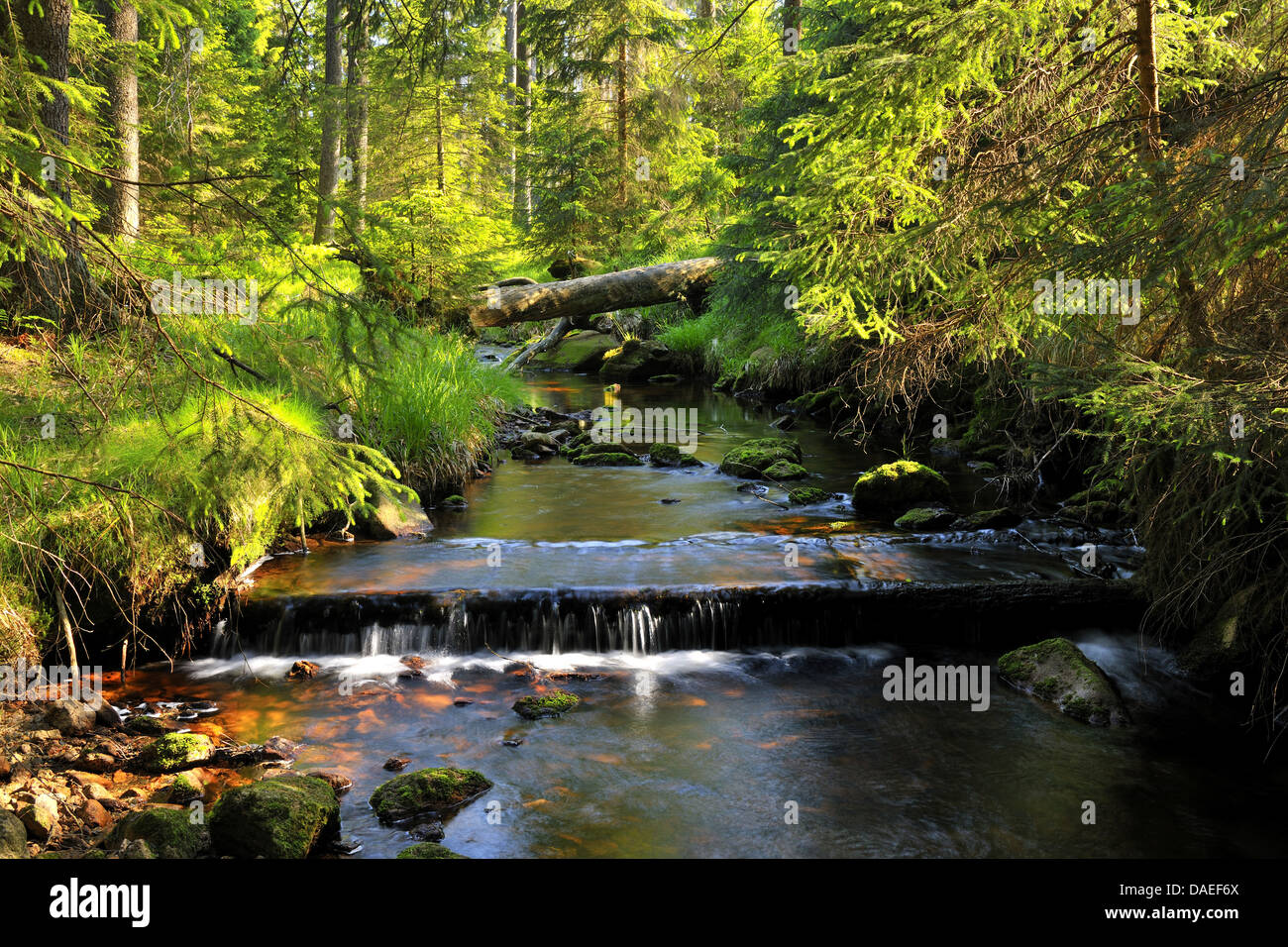 Forest stream, Germany, Lower Saxony, Harz National Park, Sankt Andreasberg - Stock Image