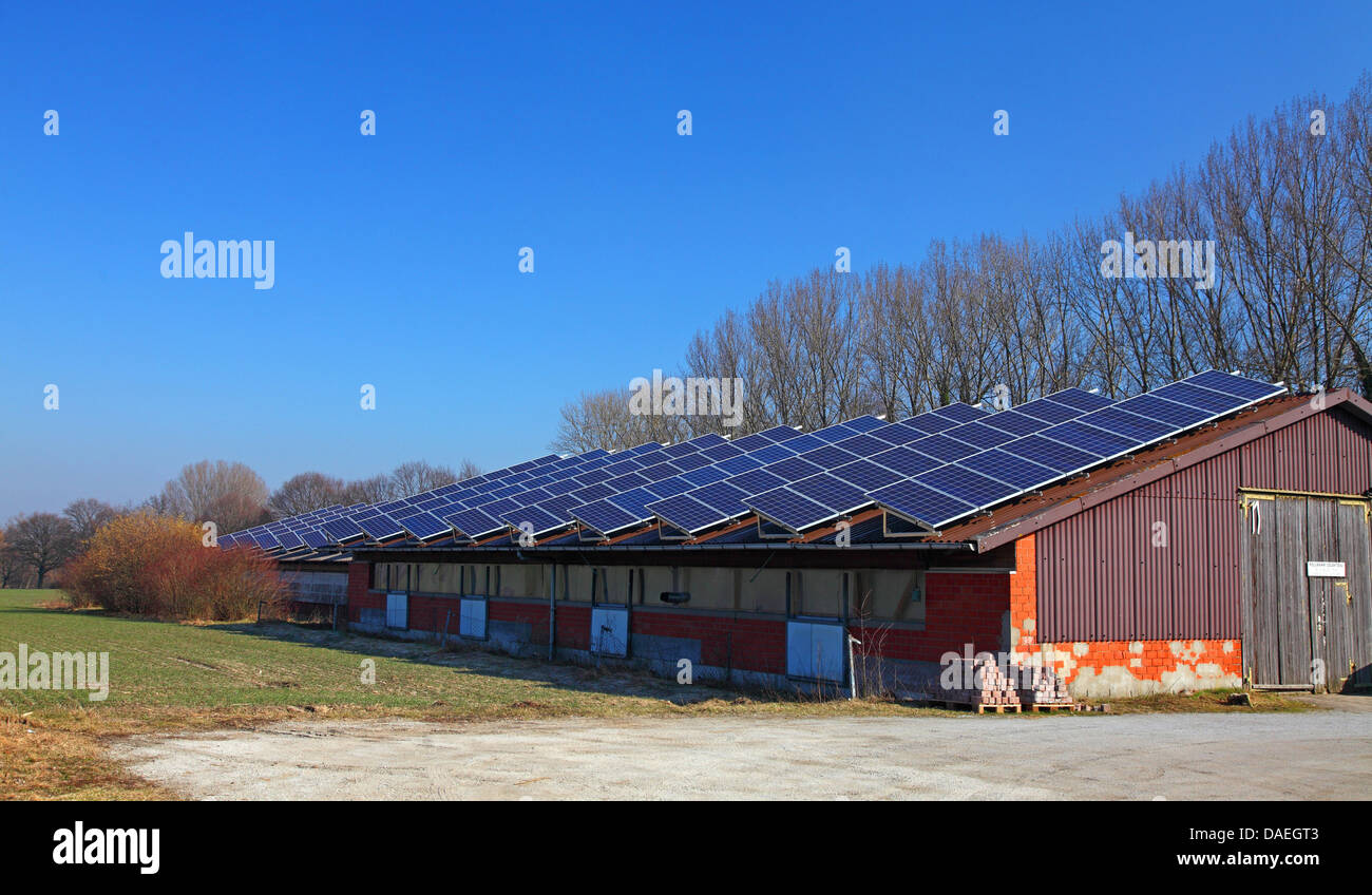 solar collectors on the roof of an agricultural building , Germany, North Rhine-Westphalia - Stock Image