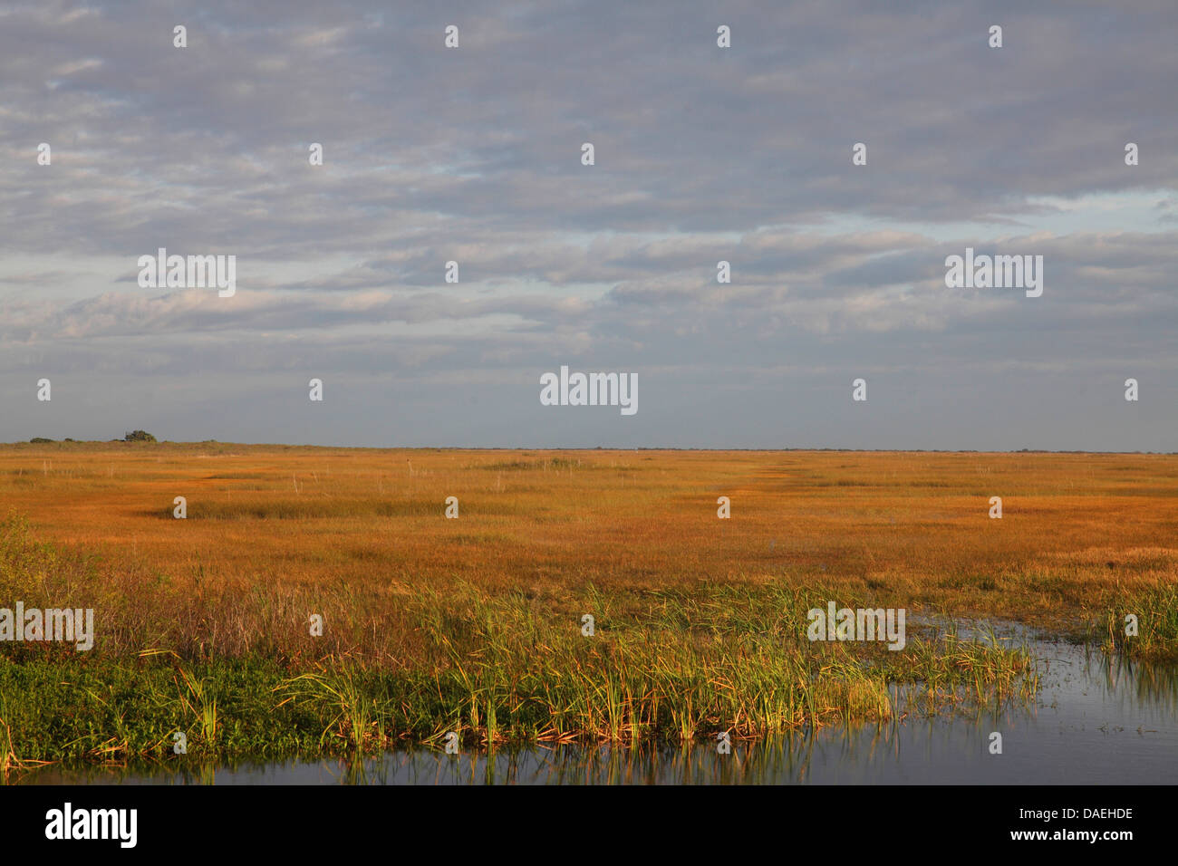 sawgrass-prairie, USA, Florida, Everglades National Park - Stock Image