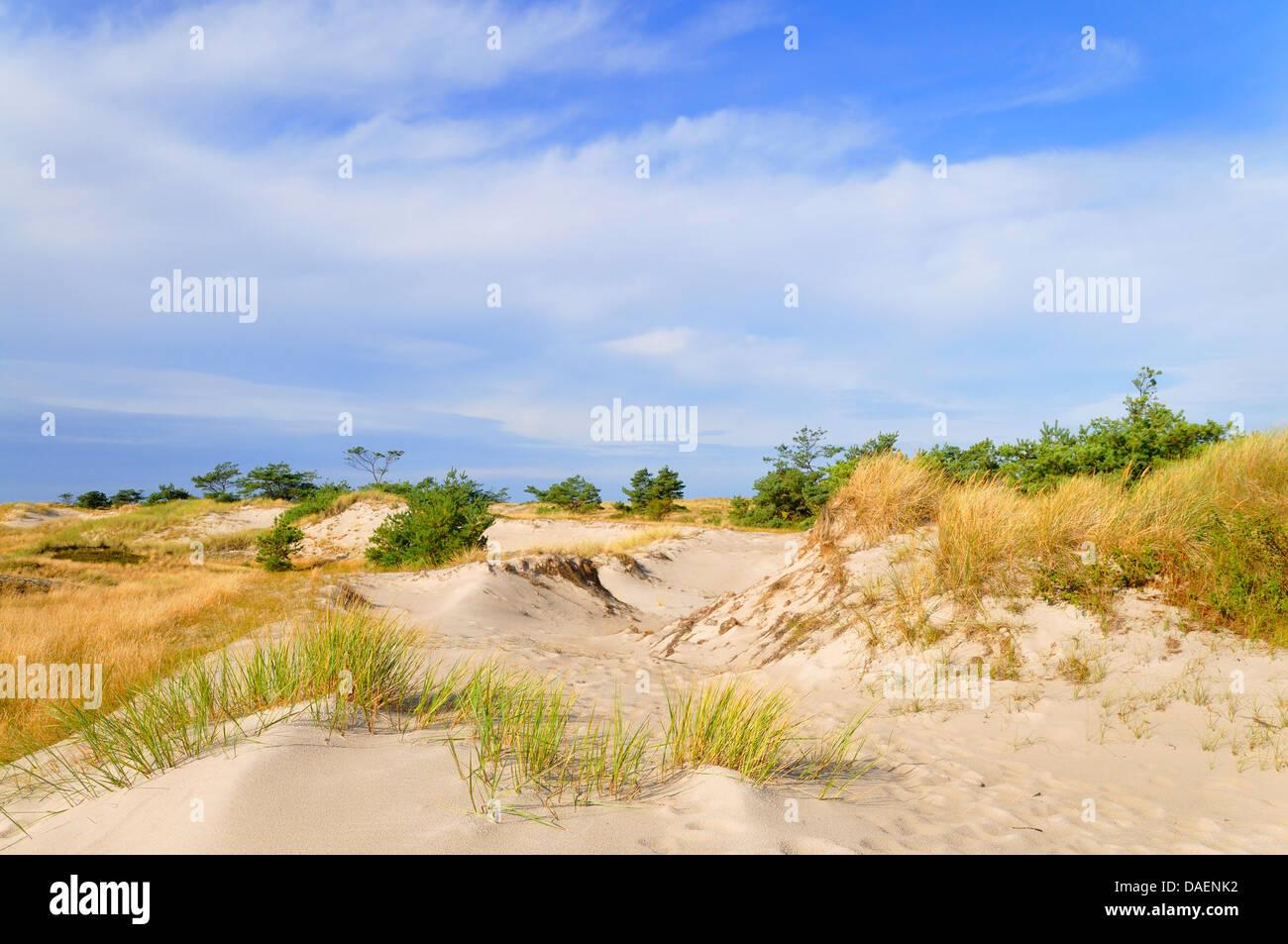 dune landscape at the Baltic Sea, Germany, Mecklenburg-Western Pomerania, Western Pomerania Lagoon Area National Stock Photo