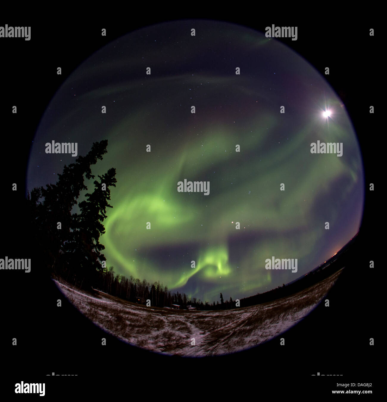 aurora and starry sky with moon over a lone house at a forest, Norway, Troms, Kvaloeya, Kattfjordeidet - Stock Image
