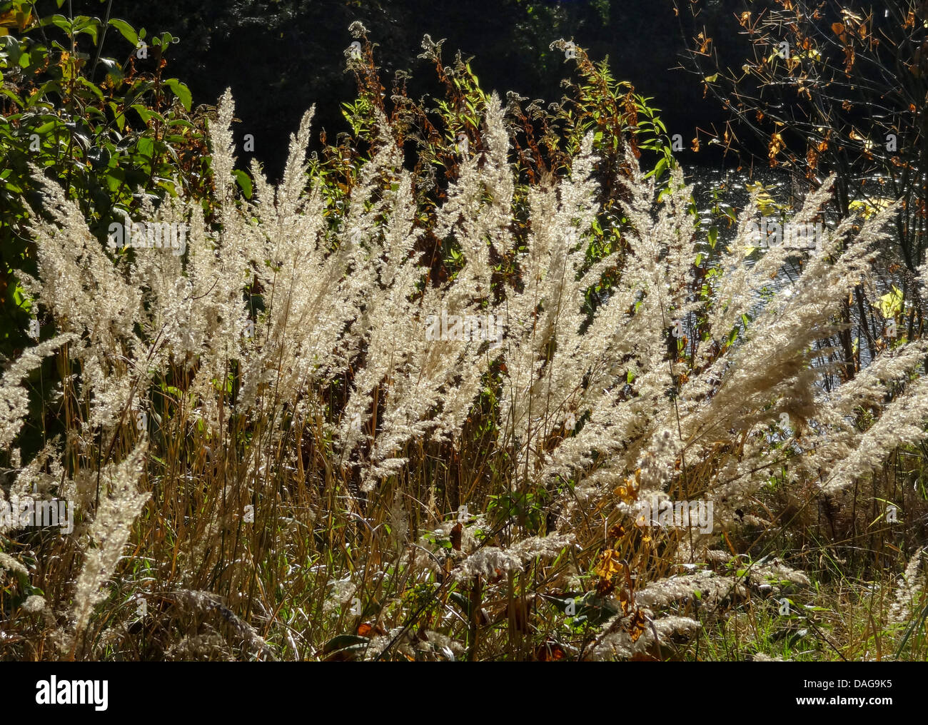 grass in autumn, Germany, North Rhine-Westphalia - Stock Image